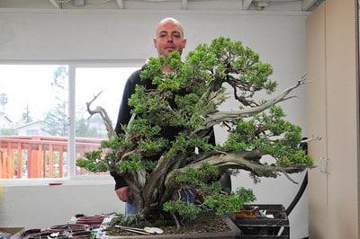Tim and California juniper