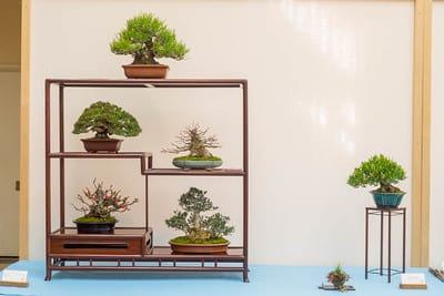 Shohin display