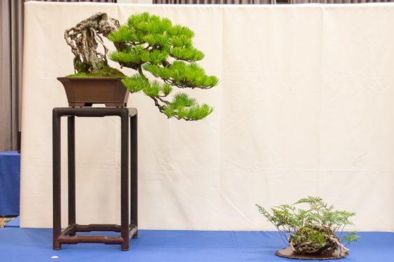 white-pine-semi-cascade