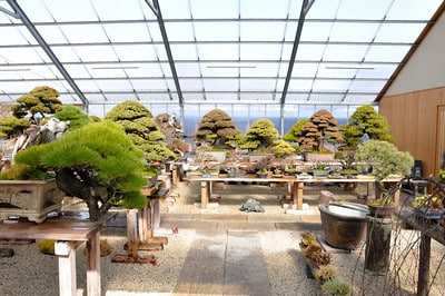 Maintaining a beautiful bonsai garden Bonsai Tonight