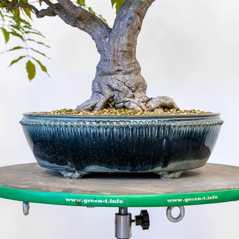 Sara Rayner bonsai pot