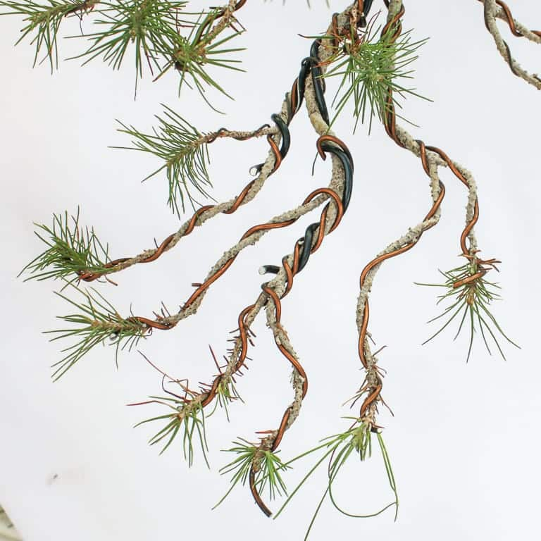Wired pine branch
