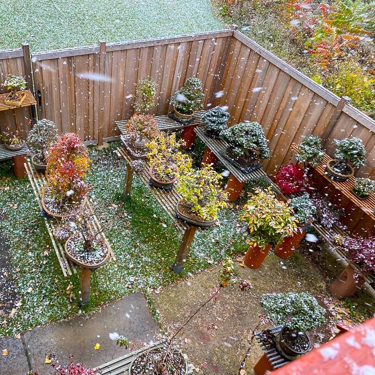 Snow on bonsai garden